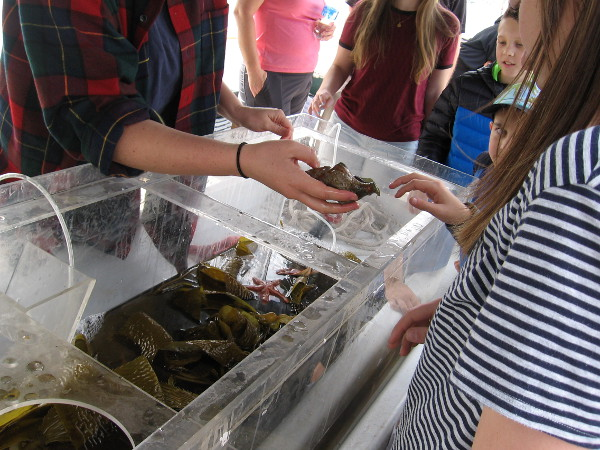 Shoppers at the Tuna Harbor Dockside Market learn about whelks and other food from the sea.