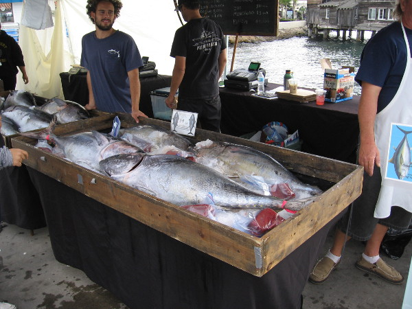 Some freshly caught silvery Pacific bluefin tuna on ice for sale. That's a lot of eating!