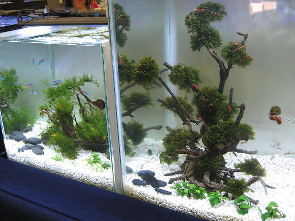 Who said bonsai plants couldn't be submerged? Makes for a lovely but rather fishy garden.