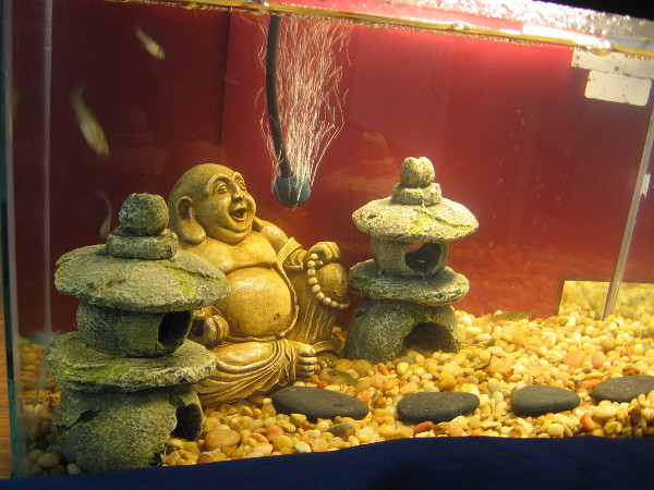 And an underwater Buddha, too! These fish must be on the path to nirvana.
