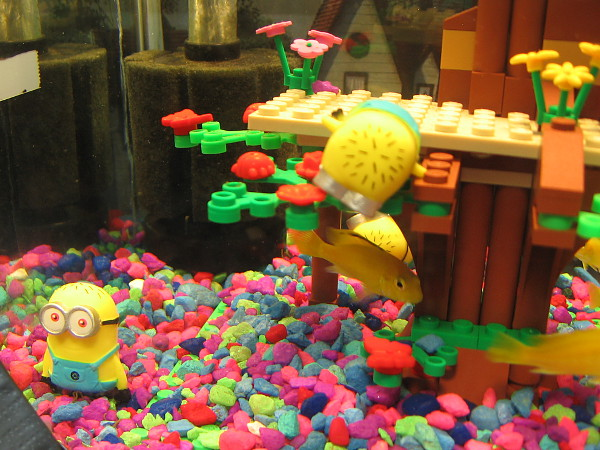 An aquarium alive with silly Minions and Lego creations and color. Oh, and some shy yellow fish, too.