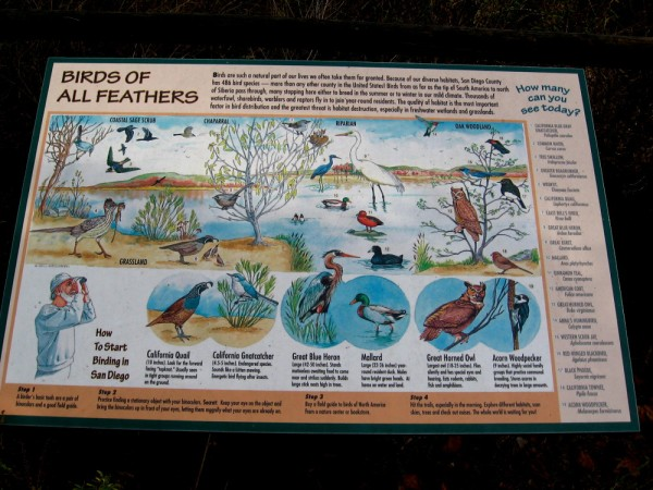 At Mission Trails Regional Park, birds of all feathers include quail, gnatcatchers, herons, egrets, ducks, woodpeckers, scrub jays, owls, and the endangered least Bell's vireo!