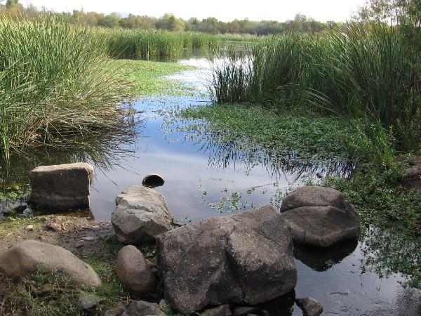 Photo of the San Diego River emerging from Kumeyaay Lake. This is near an outdoor amphitheater and fire pit. The park is a perfect place to learn about nature from rangers, and for stargazing at night!