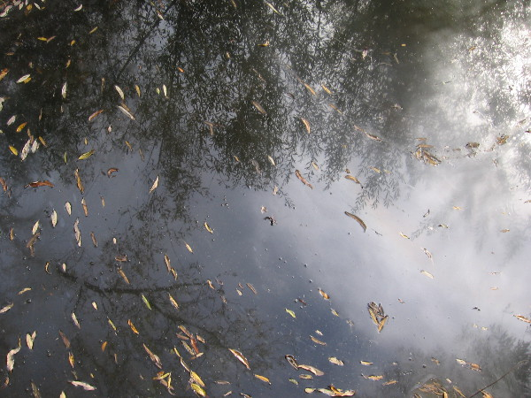 Leaves and reflections of trees in the quiet water.