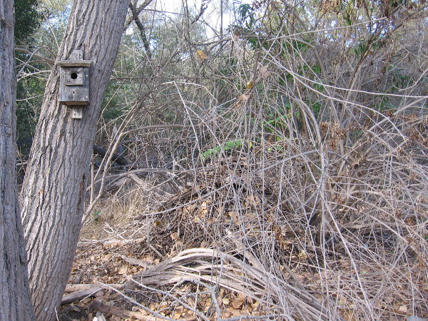 We spied a wood rat's nest of twigs and branches near the hiking trail. I learned these nests contain several rooms with different functions, not unlike a human home.