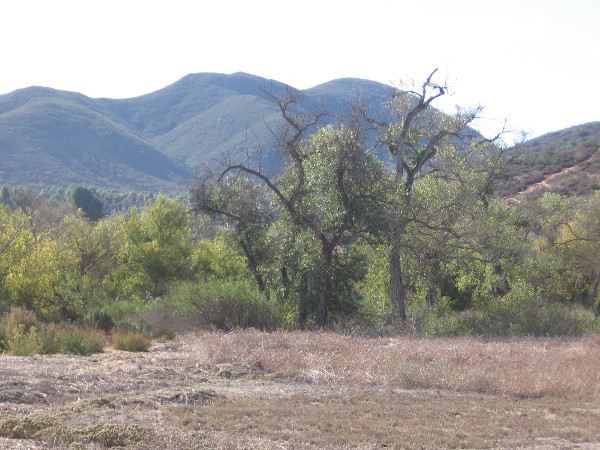 Now we are heading along the easy Grasslands Loop Trail, following the north bank of the San Diego River. Riparian trees such as willows, sycamores and cottonwoods thrive along the river.