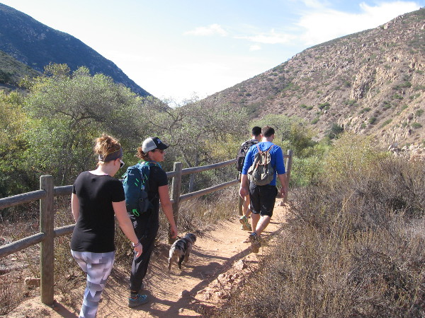 Walking along the Oak Canyon Trail. Mission Trails Regional Park is like a small wilderness in the city of San Diego. At 5,800 acres, it's the largest city park in California.