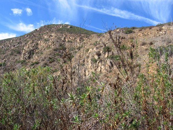 South Fortuna Mountain, elevation 1094 feet, rises to the south. It's sides are covered with native chaparral and sage scrub.