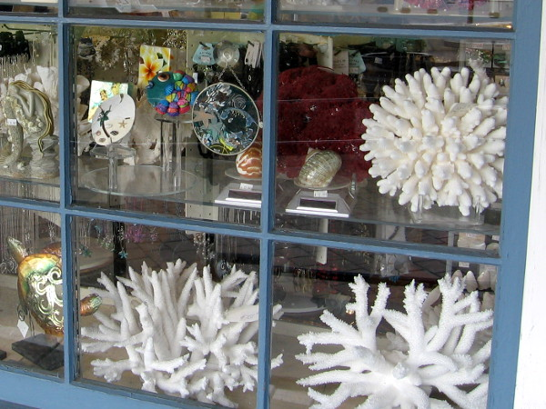Coral and other beautiful objects in a window of Seaport Village Shell Co. Limited.