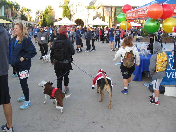 Many Thanksgiving-themed costumes and hats could be spotted among the participants. These dogs are already in the Christmas spirit!
