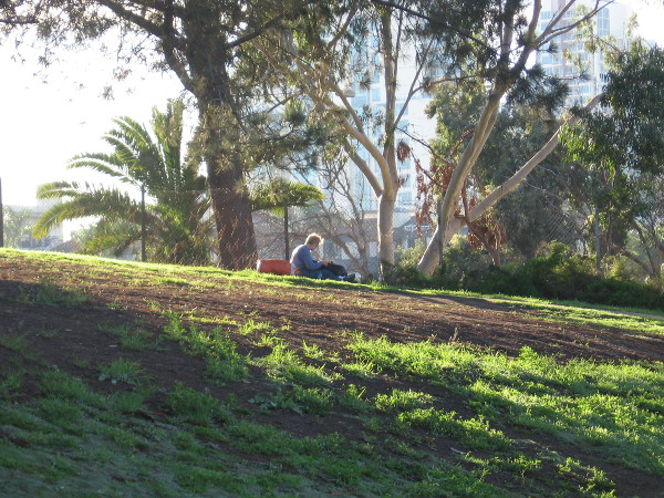 Homeless person alone on the sunlit grass in the far corner of Balboa Park.
