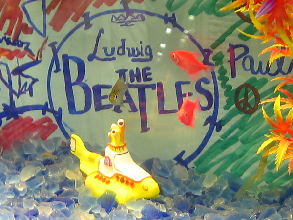 A yellow submarine in a Beatles-themed tropical fish aquarium. Photo taken in Balboa Park during the San Diego Tropical Fish Society Annual Show!