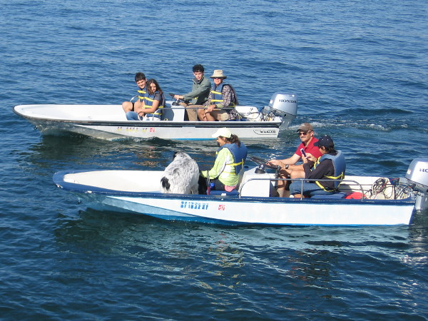 People enjoy a day of boating on blue San Diego Bay.