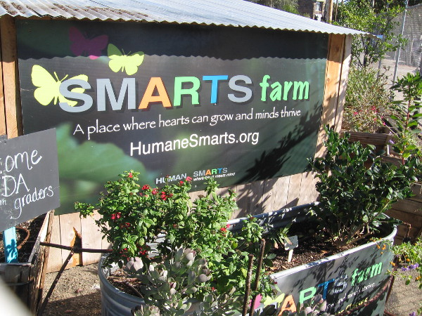 SMARTS Farm in San Diego's East Village is a community garden where hearts can grow and minds thrive.