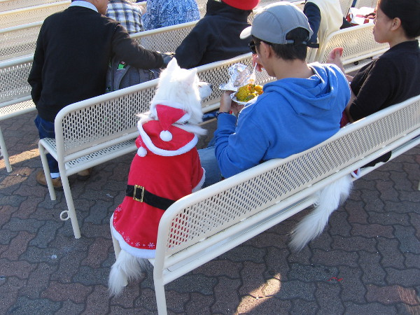If Santa had a dog, it would probably dress like this. It gets chilly up north.