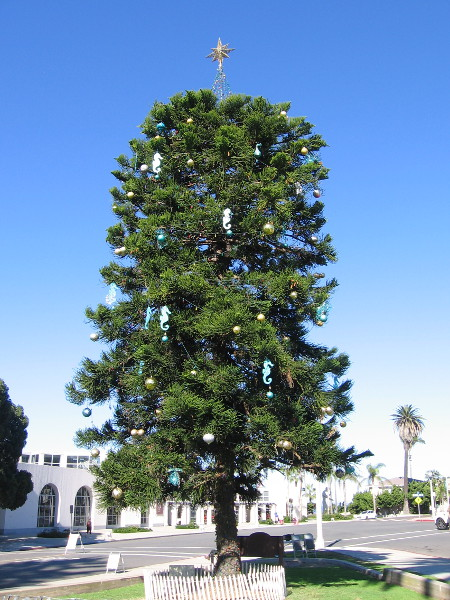 The Community Christmas Tree is hung with lights and ornaments at the La Jolla Recreation Center park.