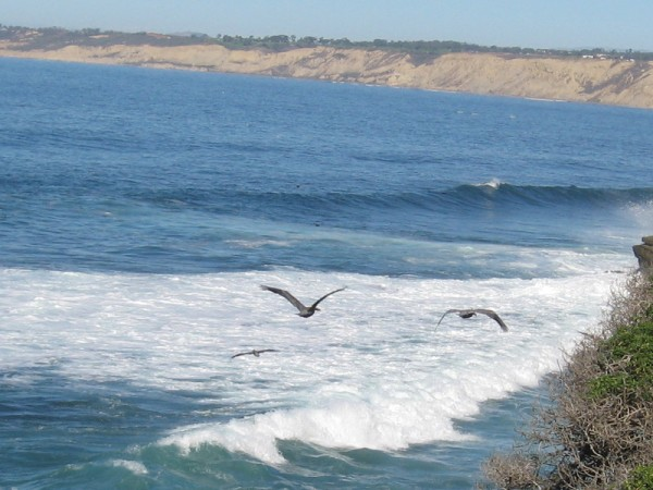 Sea birds fly along the water's edge as the surf breaks. The cliffs of Torrey Pines stretch in the distance.