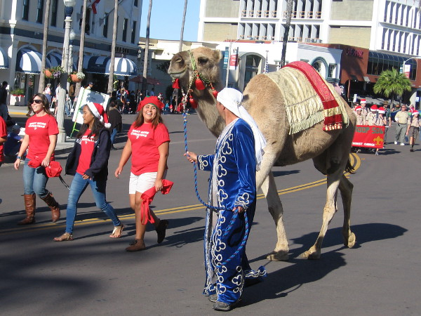 The La Jolla Presbyterian Church had Joseph, Mary, shepherds, an angel, and two live camels!