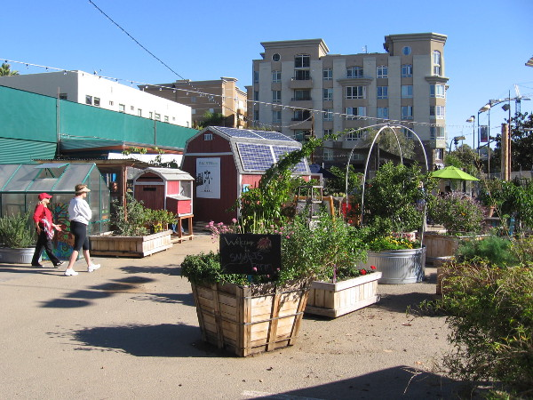 Walking around the large colorful garden. Schools and community groups can grow their own plants in an urban environment downtown.