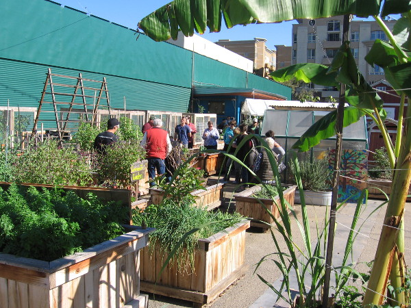 Lessons about how to plant urban crops were underway in the late morning.