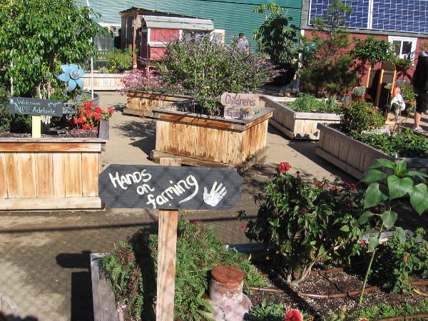 Hands on farming includes a children's garden and plants grown by nearby school KIPP Adelante Preparatory Academy--my neighbor on Cortez Hill.