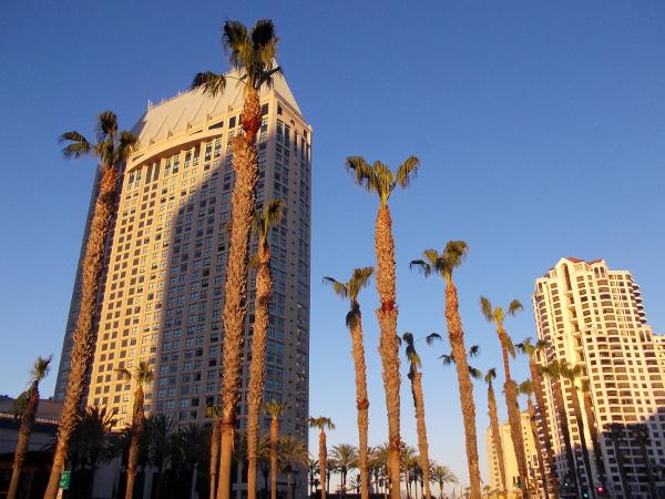 Palms along Harbor Drive and morning light on the Manchester Grand Hyatt Hotel.