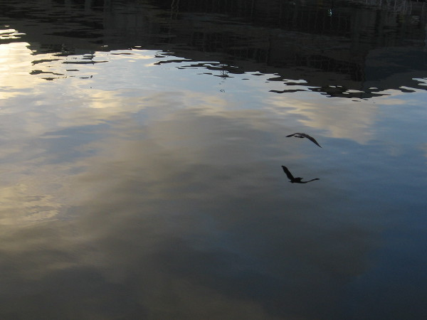 A gull glides over still water.