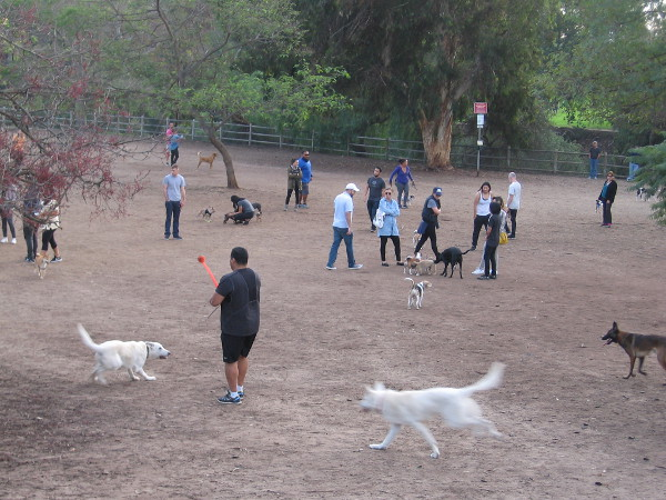 Dogs and people mingle, happy and free at Balboa Park's Nate's Point Dog Park.