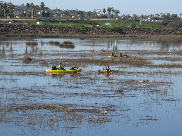 As I walked west along the San Diego River, I noticed a number of kayaks out on the water.
