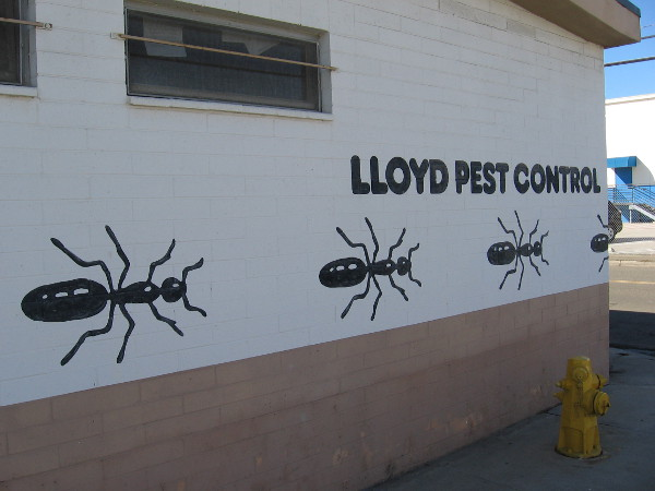 Gigantic ants crawl in a line along the wall of Lloyd Pest Control.