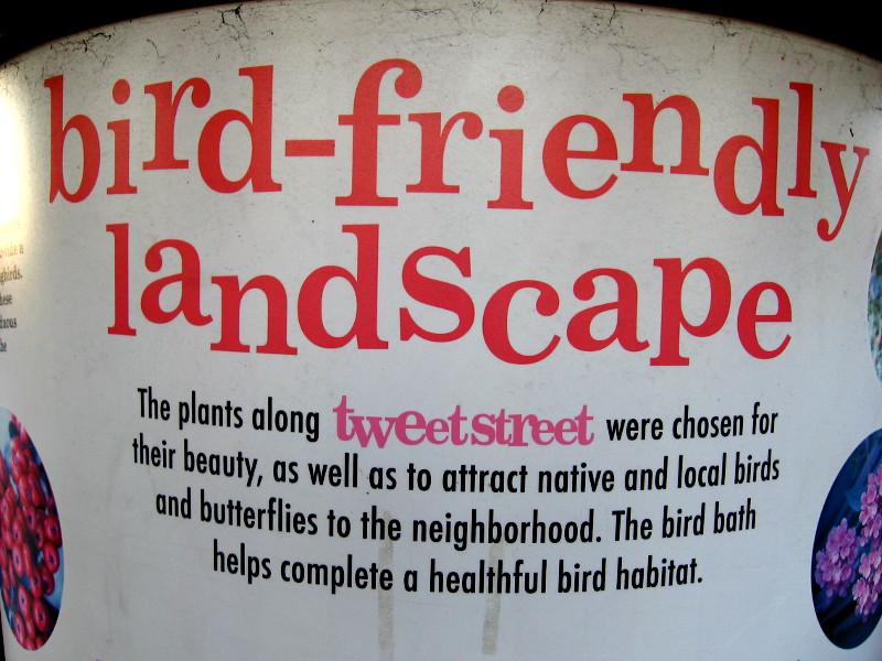 Cómo Saber Jardinar: Atraer Aves y Mariposas | Udemy