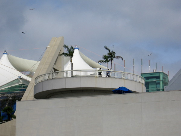 People and birds can enjoy a view of the San Diego Bay from atop the convention center.