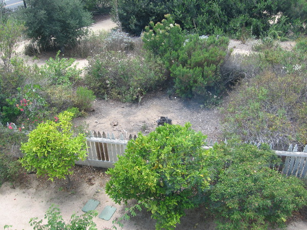Looking northwest from the second floor of the McCoy House Museum in Old Town San Diego. The Native Garden is a bit dry and scraggly--but that's how local vegetation naturally appears.