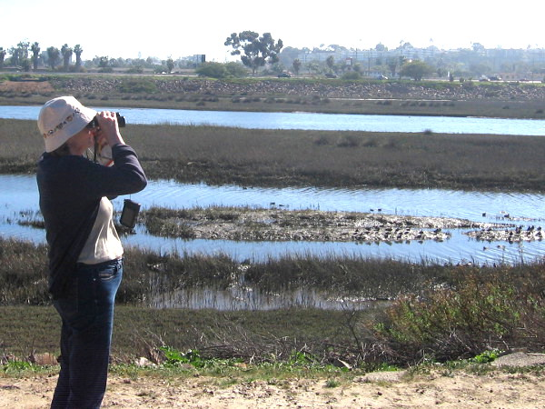 Birdwatching on north side of San Diego River, not far from Pacific Ocean.