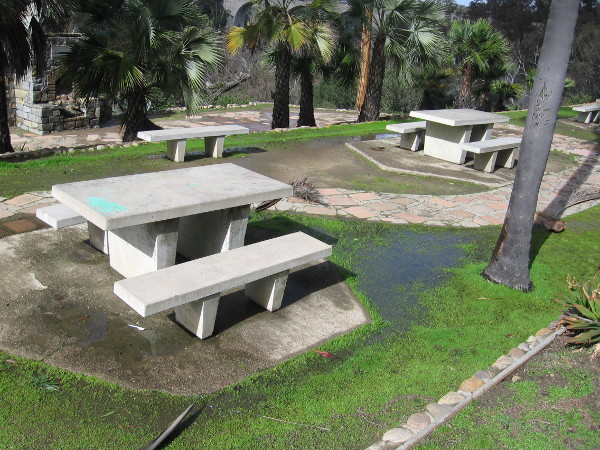 The picnic benches behind the Balboa Park Club are empty as usual. Grass has turned bright green in collected pools of water.