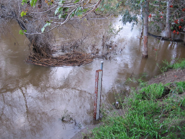 The swollen San Diego River after three winter storms in six days. A gauge beside the water shows the river has subsided to about the 8 foot mark, after reaching a high level--I believe--of around 11 feet.