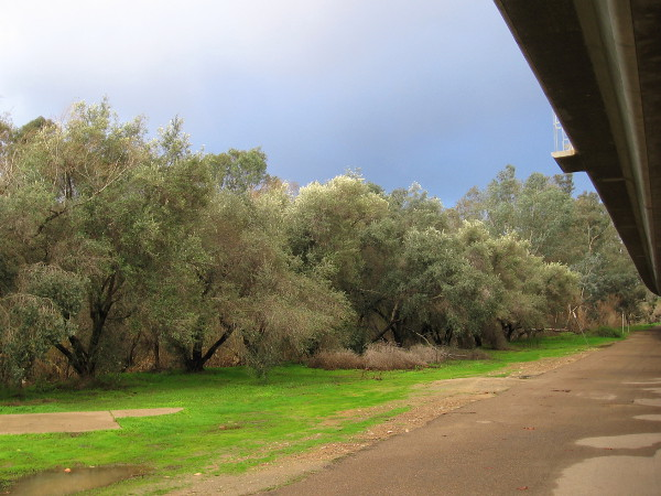 Bright green grass and dark clouds. I was sheltered from raindrops by the trolley tracks overhead.