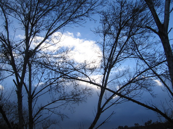 Morning sky and clouds through bare winter river trees.