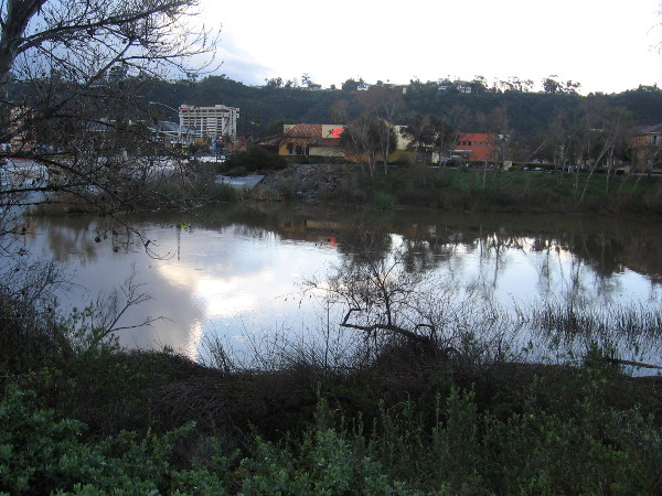 The San Diego River is unusually wide in its swollen state after the storms. It looks like an honest-to-goodness actual river!