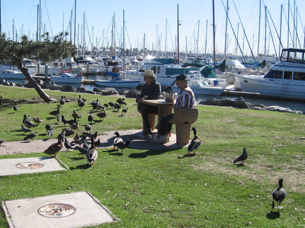 Sitting at a table by the marina feeding the birds.
