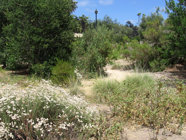 Dirt paths meander through the small Native Garden at the northwest corner of Old Town San Diego State Historic Park.