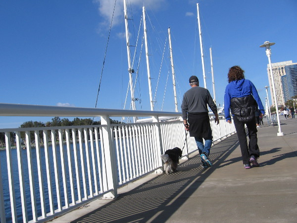 Folks with a dog walk along San Diego Bay, approaching the high masts of superyachts.