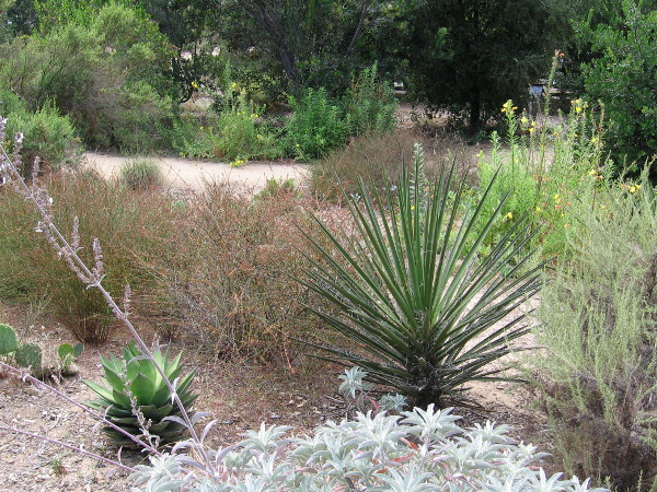 A variety of native plants found naturally in coastal San Diego's semi-arid climate.