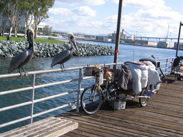 Two pelicans hanging out at the pier. A good day to kick back and fish.