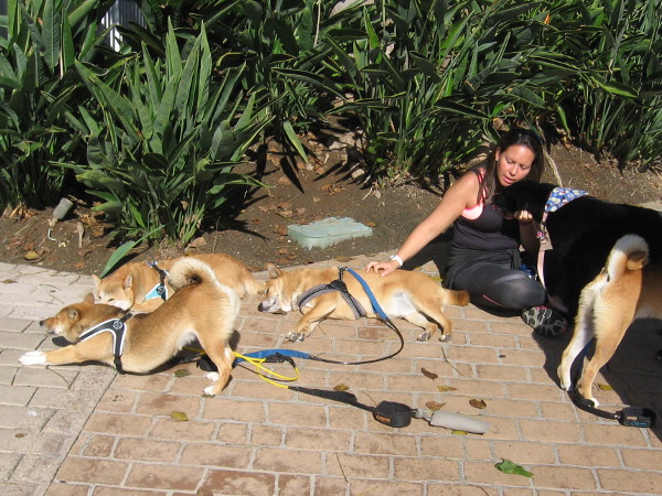 Dogs relax with a human near Seaport Village.