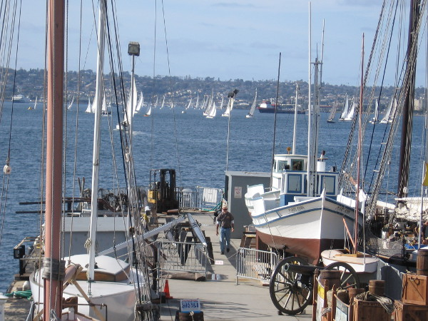 Dozens of sailboats out on San Diego Bay during New Year's Day. It's a sailing regatta!