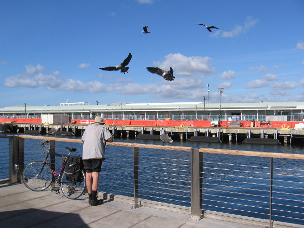 Curious gulls analyze a bicyclist at the Embarcadero's new observation deck, just north of the Broadway Pier. Life is full of surprises.