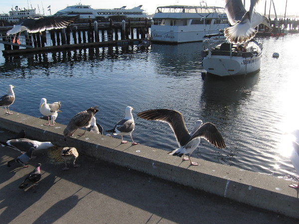 Gulls take flight beside San Diego Bay, just north of Grape Street Pier.