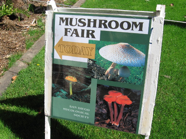 A mushroom fair was held this weekend in Balboa Park inside the Casa del Prado. The event was put on by the San Diego Mycological Society.