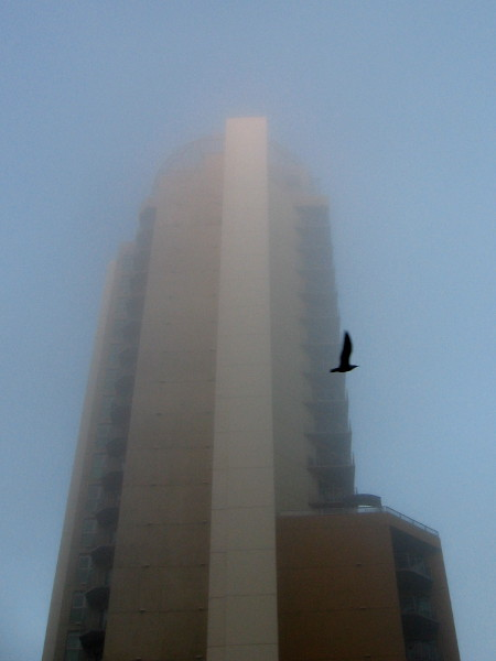 A bird flies past Cortez Blu, which rises into a foggy downtown San Diego sky.